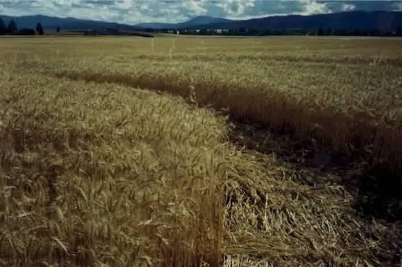 crop4
